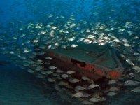 impresionante banco de peces
