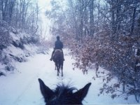 Horseback riding excursions in winter