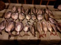 tutta la pesca