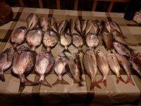 toda la pesca
