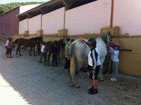Equipando a los caballos