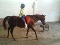 Volteo a caballo