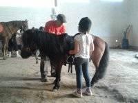 Colocando la silla en el pony