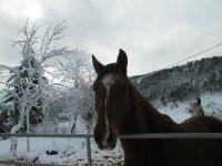 Morgovejo horses