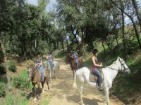 Parada con los caballos en el camino