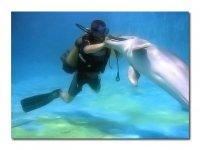Baile con delfines