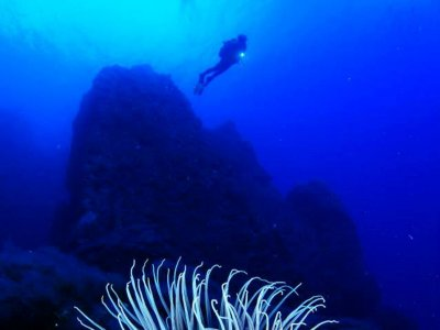 Dive session, El Hierro
