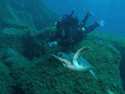 在El Hierro潜水三次潜水