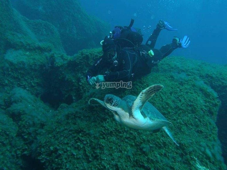 Nadando con la tortuga