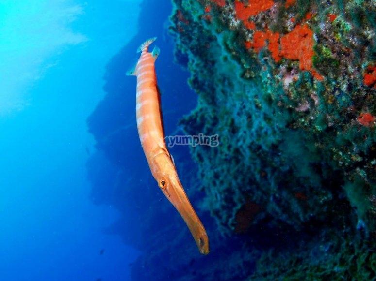 神奇的海洋动物蛞蝓Camuflage海上