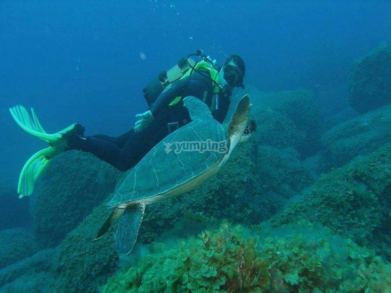 潜水与海豚海龟漫步在水