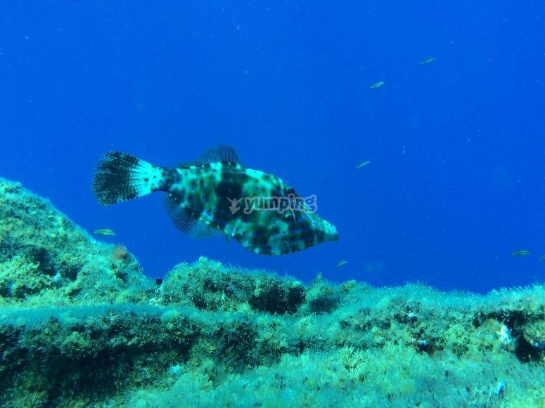 Camuflage en el mar