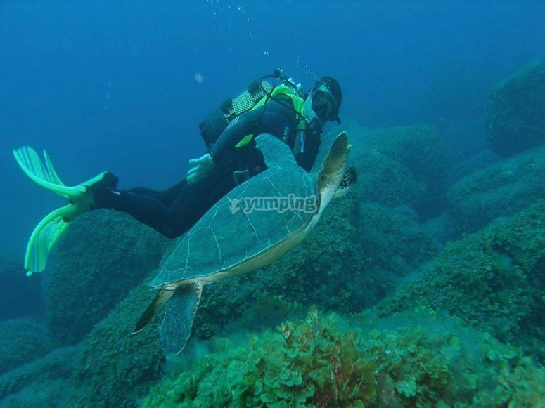 美好的事物在水中与海豚海龟漫步