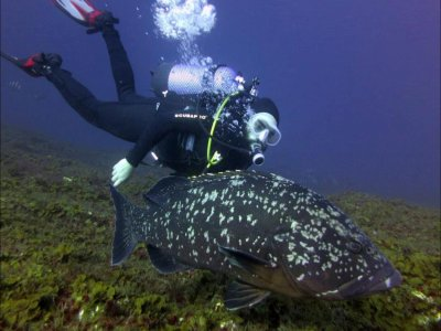 Diving baptism, El Hierro