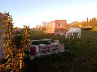 在周围环境中放牧马匹