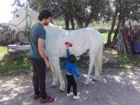 Pequeño cepillando al caballo