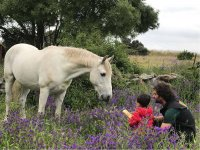 Fomentando el carino y respeto por los caballos