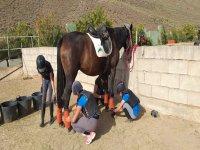 Preparando al caballo para la clase de equitación