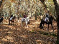 Horse riding tour in Brion
