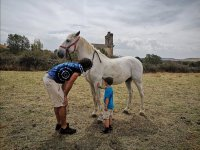 教小孩子尊重马匹
