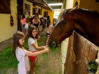 Dando de comer al caballo