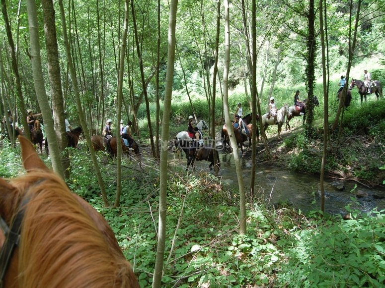 Paseando todo el grupo por el bosque