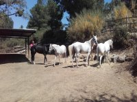 Rutas a caballos