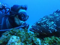 Buceador frente al pez en El Hierro