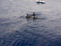 Los delfines de Tenerife