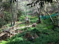 aventuras en el bosque