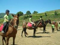 clases de caballo