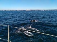 Delfin davanti alla nostra nave
