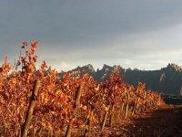 山间的一些葡萄园的视图