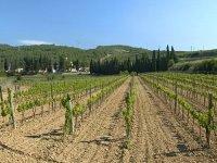 种植新葡萄