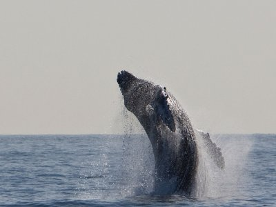 2-Hour Whale Watching in Lanzarote