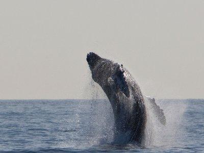 Avistamiento de cetáceos en Lanzarote 2 horas