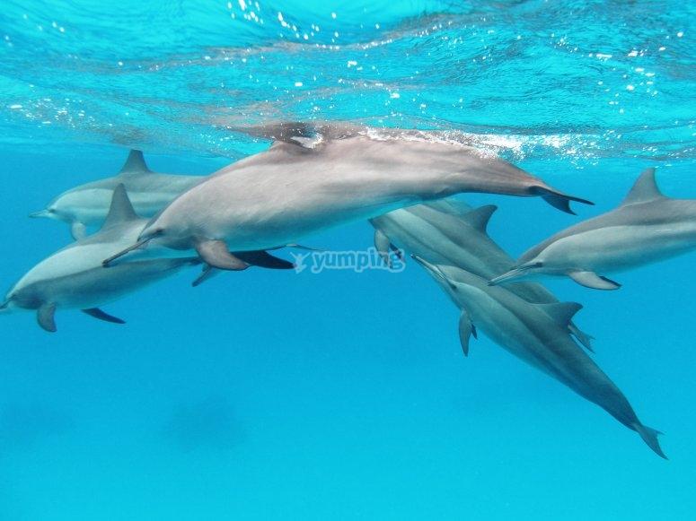 Delfines bajo ela gua
