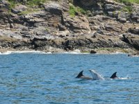 Delfini molto vicini alla costa dell'isola