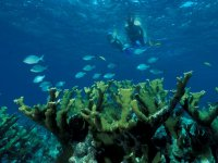 contempla las bellezas marinas