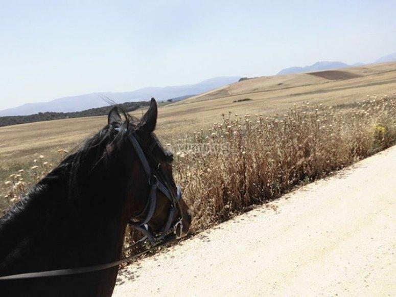 Desde el caballo
