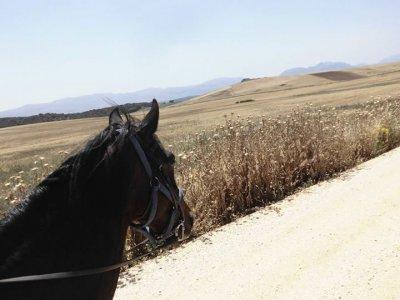 Ruta ecuestre por Málaga de 4 jornadas con comida