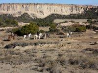 Rutas a caballo por Bardenas