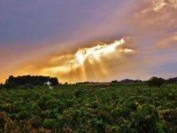 sol entre las nubes alumbrando a unos vinedos
