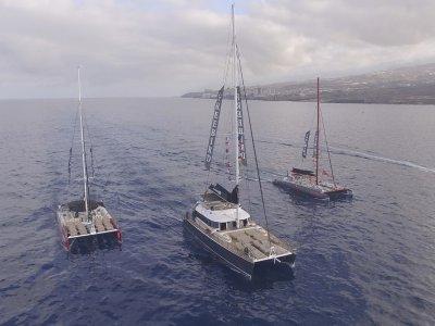 Freebird Catamarans Avistamiento de Cetáceos