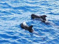cachalotes