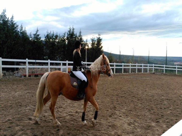 最好的马匹