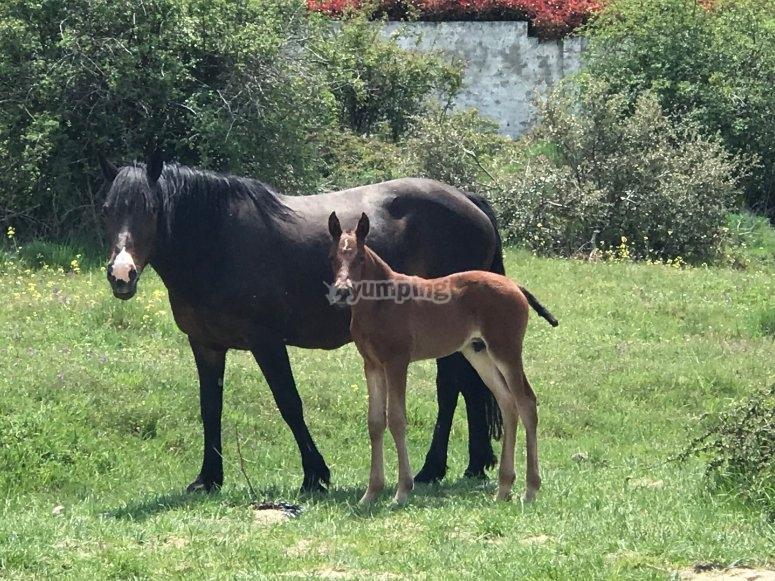 母马和小马驹