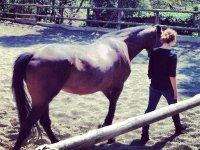 Paseando al caballo en la pista