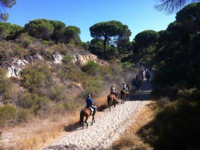 Equitazione a El Rocío e Doñana con rebujito