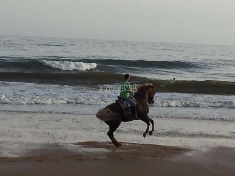 Paseos a caballo por la playa en invierno